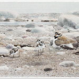 Lars Jonsson - Litografi - Vår strand