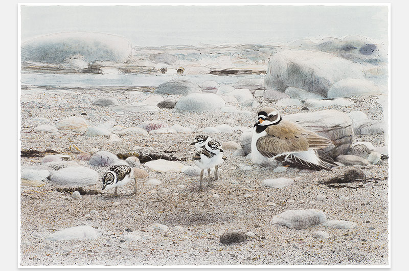 Lars Jonsson - Vår strand