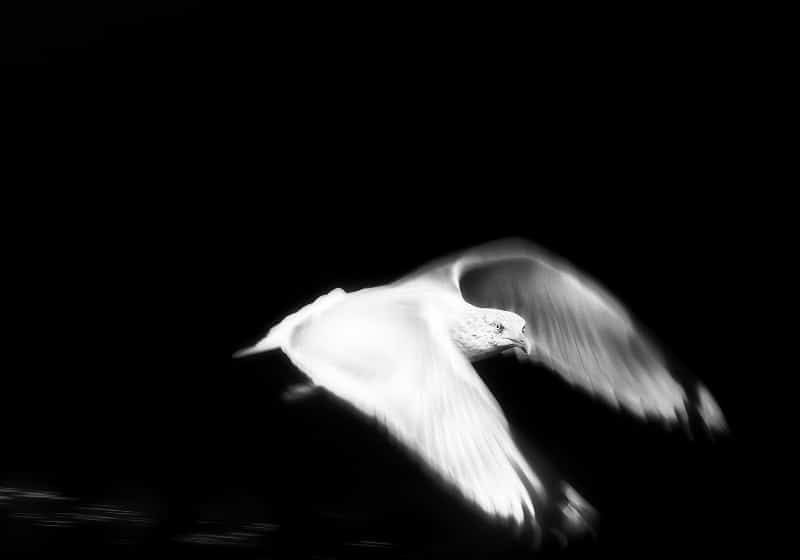 Jonny Ullström - Nyfiken måsfågel
